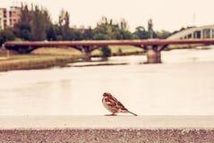 Σπουργίτι στην πόλη, κόκκινο φίλτρο στοκ εικόνες