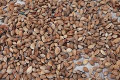 Σπόροι βερίκοκων Στοκ φωτογραφία με δικαίωμα ελεύθερης χρήσης