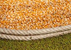 σπόροι δημητριακών στοκ φωτογραφία με δικαίωμα ελεύθερης χρήσης