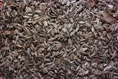 Σπόροι ηλίανθων, τρόφιμα πουλιών στο χειμώνα, ελαιόσποροι στοκ εικόνες
