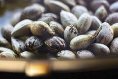 Σπόροι κάνναβης σε ένα πιάτο με τα χρυσά τροχίσματα Στοκ Φωτογραφία
