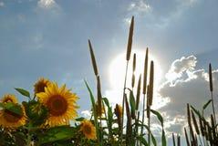 Σπόροι και ήλιος Στοκ Εικόνες