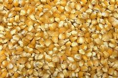 σπόροι καλαμποκιού ανασ&k Στοκ φωτογραφία με δικαίωμα ελεύθερης χρήσης