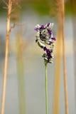 σπόροι καρπών Στοκ φωτογραφία με δικαίωμα ελεύθερης χρήσης