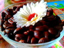 Σπόροι καφέ με το λουλούδι στοκ εικόνες