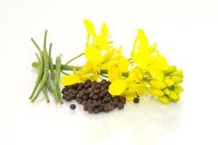 Σπόροι καφετιάς μουστάρδας και λουλούδι μουστάρδας στοκ εικόνα