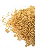 σπόροι μουστάρδας στοκ εικόνα