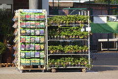 Σπόροι λουλουδιών στις τσάντες εγγράφου Στοκ εικόνα με δικαίωμα ελεύθερης χρήσης