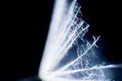Σπόροι πικραλίδων με τις λεπτομέρειες Στοκ Εικόνες