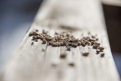 Σπόροι πουλιών σε μια σανίδα του ξύλου στοκ εικόνα