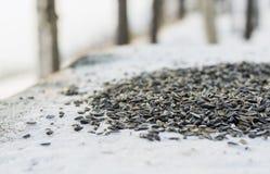 Σπόροι πουλιών στο χιονώδη βράχο Στοκ Εικόνες