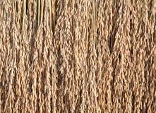Σπόροι ρυζιού στοκ εικόνες