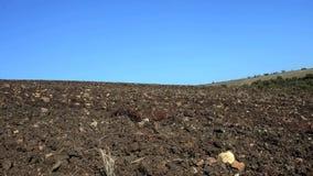 Σπόροι σποράς γεωργικών τρακτέρ απόθεμα βίντεο