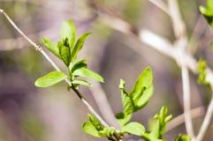 Σπόροι σφενδάμνου Στοκ εικόνα με δικαίωμα ελεύθερης χρήσης