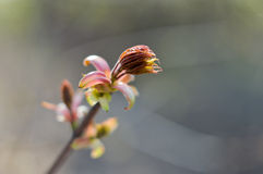 Σπόροι σφενδάμνου Στοκ φωτογραφίες με δικαίωμα ελεύθερης χρήσης