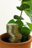 Σπόροι της οικονομικής ανάπτυξης στοκ εικόνα με δικαίωμα ελεύθερης χρήσης