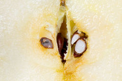 Σπόροι της Apple Στοκ Εικόνα