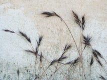 Σπόροι χλόης ενάντια στον τοίχο Στοκ Εικόνες
