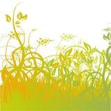 Σπόροι χλόης και λουλουδιών στο λιβάδι Στοκ εικόνα με δικαίωμα ελεύθερης χρήσης