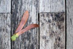Σπόροι alatus Dipterocarpus στο ξύλινο υπόβαθρο Στοκ Φωτογραφία