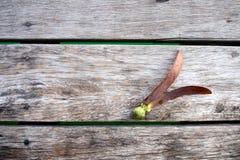 Σπόροι alatus Dipterocarpus στο ξύλινο υπόβαθρο Στοκ φωτογραφία με δικαίωμα ελεύθερης χρήσης