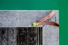 Σπόροι alatus Dipterocarpus στο ξύλινο υπόβαθρο Στοκ Εικόνες