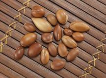 Σπόροι argan, φυτό του Μαρόκου για το καλλυντικό Στοκ φωτογραφίες με δικαίωμα ελεύθερης χρήσης