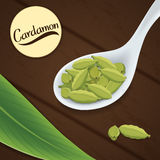 Σπόροι Cardamon στο κουτάλι διανυσματική απεικόνιση