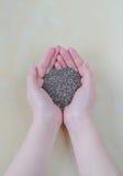Σπόροι Chia στα θηλυκά χέρια Στοκ Φωτογραφίες