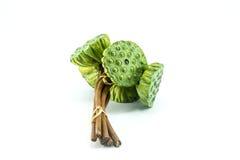 Σπόροι Lotus Στοκ Φωτογραφίες