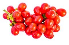 Σπόροι Triandra Tiliacora στοκ εικόνες με δικαίωμα ελεύθερης χρήσης
