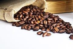 σπόρος καφέ στοκ εικόνα