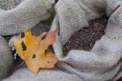 Σπόρος λιναριού burlap στην τσάντα isolated leaf maple στοκ φωτογραφία