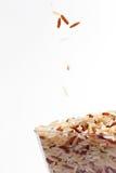 σπόρος ρυζιού Στοκ Εικόνες