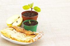 Σπόρος της Apple στο σπορόφυτο στα φρούτα στην πίτα Στοκ φωτογραφία με δικαίωμα ελεύθερης χρήσης