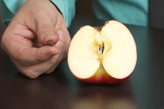 Σπόρος της Apple στο χέρι ενός ατόμου Στοκ εικόνα με δικαίωμα ελεύθερης χρήσης