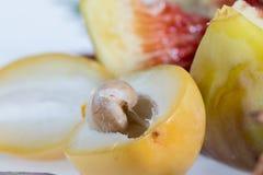 Σπόρος των φρούτων ημερομηνίας στοκ φωτογραφία με δικαίωμα ελεύθερης χρήσης