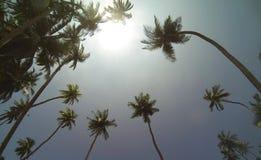 Σρι Λάνκα - Tangalle Στοκ εικόνα με δικαίωμα ελεύθερης χρήσης