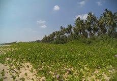 Σρι Λάνκα - Tangalle Στοκ φωτογραφία με δικαίωμα ελεύθερης χρήσης