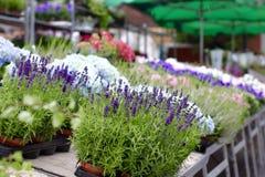 Στάβλος λουλουδιών Στοκ Φωτογραφίες