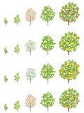 Στάδια αύξησης οπωρωφόρων δέντρων Φάσεις αύξησης μανταρινιών της Apple, ροδάκινων και λεμονιών r Πρόοδος ωρίμανσης Οπωρωφόρα δέντ ελεύθερη απεικόνιση δικαιώματος