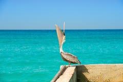 Στάσεις πελεκάνων σε μια αποβάθρα με μια όμορφη εξωτική μπλε θάλασσα Μια τροπική γαλήνια σκηνή αποβαθρών με την καραϊβική θάλασσα Στοκ φωτογραφία με δικαίωμα ελεύθερης χρήσης