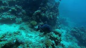 Στάσεις ψαριών στη θέση σε αργή κίνηση απόθεμα βίντεο