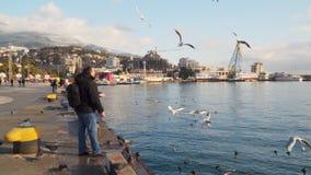 Στάση ανδρών και γυναικών στα πουλιά ακτών και τροφών φιλμ μικρού μήκους
