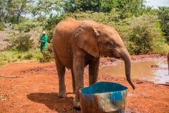 Στάση ελεφάντων Orphaned μωρών στοκ εικόνες