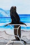 στάση θάλασσας λιονταριών Στοκ φωτογραφία με δικαίωμα ελεύθερης χρήσης
