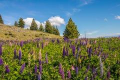 στάση μυρωδιάς λουλουδιών στοκ φωτογραφίες με δικαίωμα ελεύθερης χρήσης