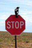 στάση σημαδιών κοράκων στοκ φωτογραφίες με δικαίωμα ελεύθερης χρήσης