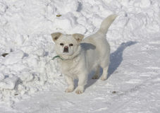 στάση χιονιού σκυλιών Στοκ φωτογραφίες με δικαίωμα ελεύθερης χρήσης