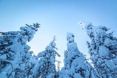 στάση ψηλός Στοκ Εικόνα